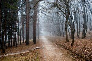 Гуояю в парке одиноком_03